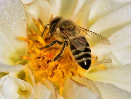 hiduplah-seperti-lebah