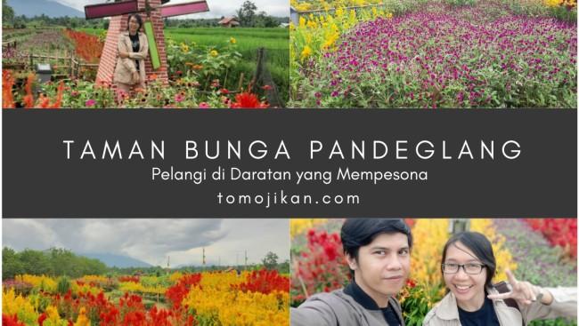 Taman Bunga Pandeglang, Pelangi diDaratan yang Mempesona