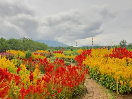 taman-bunga-kampung-jambu-pandeglang
