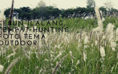 kebun ilalang tempat hunting foto keren tema ilalang