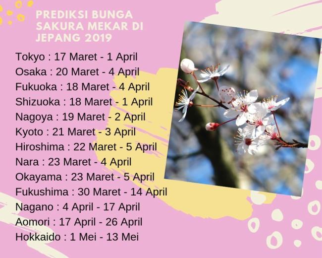 prediksi bunga sakura mekar di jepang