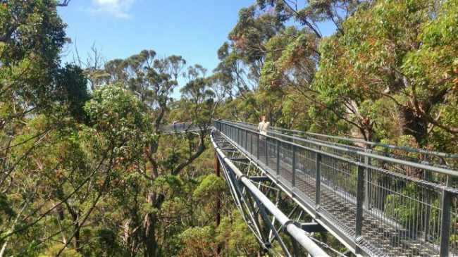valley of the giants treetop walk walpole-nornalup national park